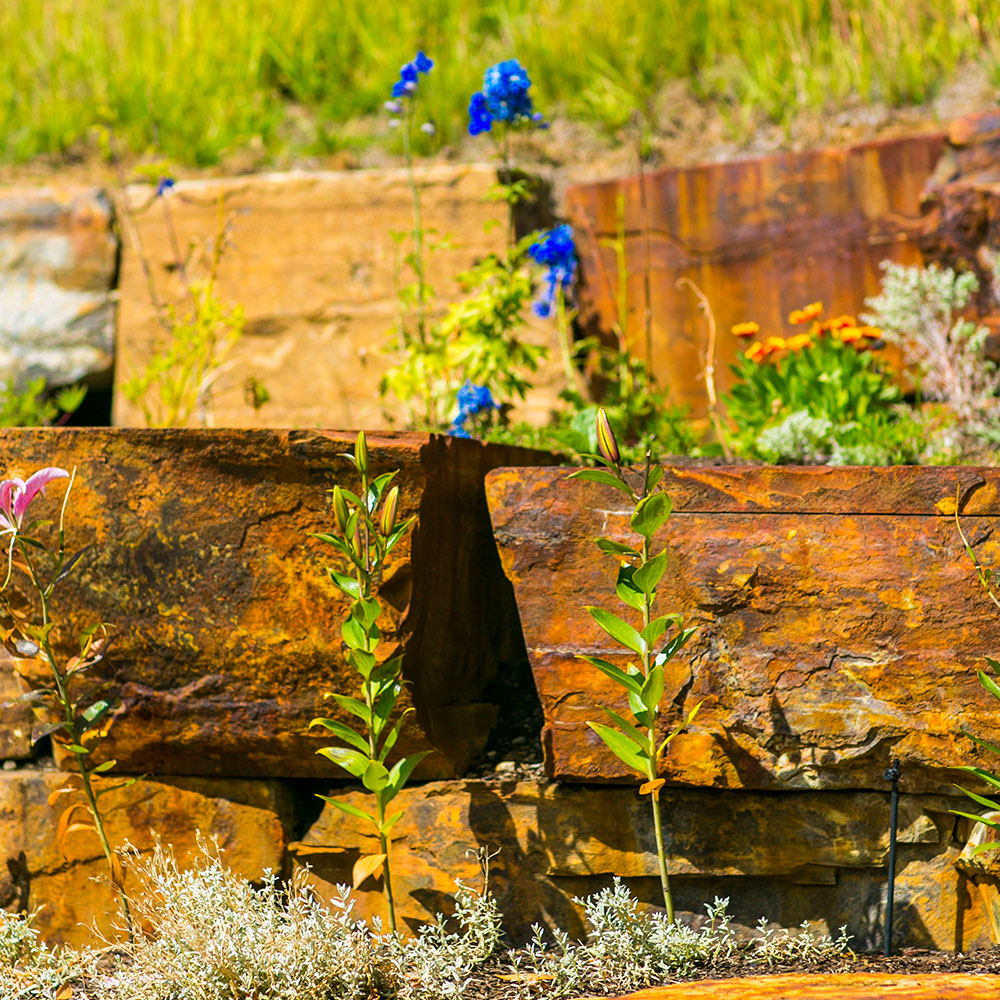 Wildflowers growing up next to landscaped rock