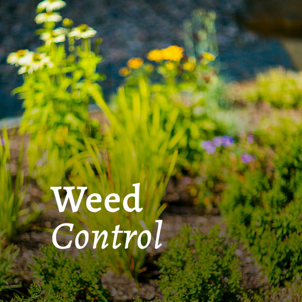 Weed Control Call to Action